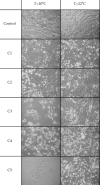 Microscopic photographs of cells exposed to selected doxorubicin concentrations. Photographs are taken at a magnification of ten times. C1 = 0.01 μg ml−1, C2 = 0.04 μg ml−1, C3 = 0.5 μg ml−1, C4 = 3.0 μg ml−1, C5 = 10 μg ml−1.