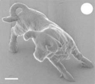 Nano-bull. A team of Japanese engineers has created the smallest sculpture of a bull, which could only be viewed with a Scanning Electron Microscope. Source: Kawata et al. [8]