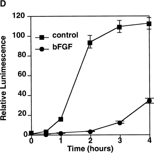 Pretreatment with bFGF inhibits Fas-mediated apoptosis. (A) FH2 cells were pretreated with 100 ng/ml EGF, 100 ng/ml IGF or 10 ng/ml bFGF for 16 h, and then stimulated with 200 ng/ml agonistic anti-Fas mAb RK-8 for the indicated times. Cell viability was measured by amido black staining assay (see Materials and Methods). (B) Activation of MAPK in FH2 cells treated with EGF, IGF, or bFGF was detected by Western blotting with anti�phospho-MAPK antibody. Expression level of MAPK was confirmed by Western blotting with anti-MAPK antibody. (C and D) FH2 cells were pretreated with or without 10 ng/ml bFGF for 16 h and stimulated with anti-Fas mAb RK-8 for the indicated times. Activation of caspases in cell lysate was measured using the fluorescent substrate IETD-MCA and DEVD-MCA for caspase-8/6 (C) and caspase-3/7 (D), respectively.