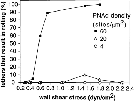 Conversion of tethering events to rolling is a  function of wall shear stress  and site density of PNAd.  Tethers were considered to  result in rolling when neutrophils moved for at least 2 s at  a mean velocity of at least  fivefold lower than the mean  hydrodynamic velocity of untethered cells at a given shear  stress.