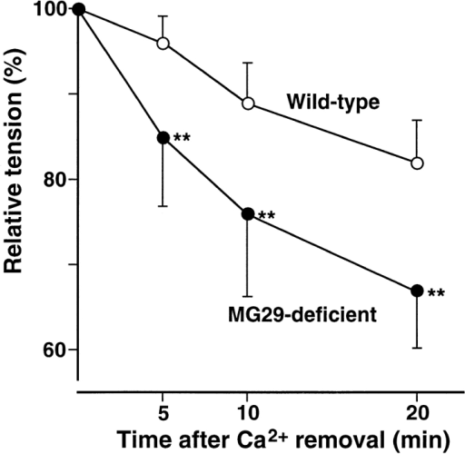 Effects of Ca2+ withdrawal on twitches in MG29-deficient skeletal muscle. Twitch tension at 5, 10, and 20 min after Ca2+ removal from the extracellular solution was measured in diaphragm muscles from 8�9-wk-old mice. Each value normalized to tension under normal conditions represents the mean ± SD. (n = 7�9 from six mice). Significant differences between the groups were observed by t test (asterisks indicate P < 0.01).