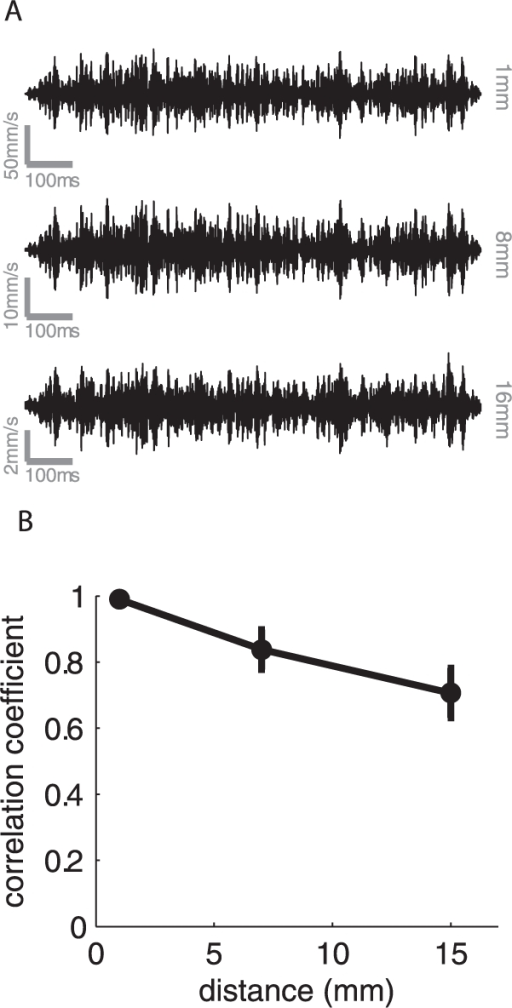 Waveform distortion as a function of distance from the locus of stimulation.A. Traces of traveling waves produced by a noise stimulus (low- and high- frequency cut-offs of 300 and 600 Hz, respectively) measured 1, 8 and 16 mm away from the locus of stimulation. B. Correlation between the stimulus applied to the skin (measured using the accelerometer on the vibration exciter) and the stimulus measured at various distances from the locus of stimulation, averaged across participants (error bars denote SEM). Stimuli consisted of band-pass noise with various low- and high-frequency cut offs. We find that the waveform is, on average, well preserved as it travels along the finger.