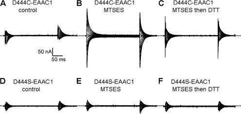 The effects of MTSES and DTT on the transient currents by D444C. Currents recorded in the presence of 2 mM L-aspartate were subtracted from currents recorded in its absence in oocytes expressing either D444C-EAAC1 (A�C) or D444S-EAAC1 (D�F). The transient currents were measured before (A and D) or after the application of 2 mM MTSES (B and E) and after MTSES and 50 mM DTT (C and F). Typical oocytes are shown (n = 3).