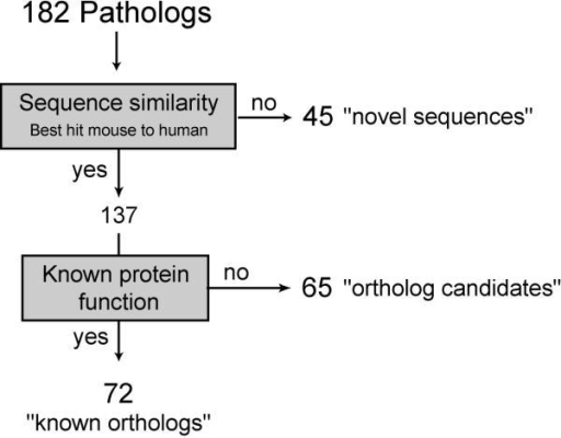 "Flow chart of method used to classify ""pathologs"". To identify pathologs that correspond to already known mouse orthologs or potential new orthologs, cDNA sequences were compared to known human sequences and conservation of synteny assessed using mouse to human mapping information. If the patholog corresponded to best mouse to human hit the reported function of the gene product was checked. Mouse sequences with reported human ortholog and known function were classified as ""known ortholog"", sequences reported as best mouse to human hit with unknown function were classified as ""ortholog-candidate"" and sequences with unknown function that did not correspond to the best mouse to human hit were classified as ""novel sequences""."
