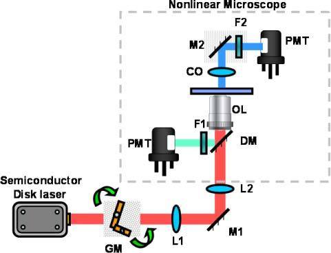 Schematic experimental setup used for nonlinear imaging. The red path corresponds to the fundamental excitation beam centered at 965nm, the blue path to the SHG emission and the green path to the TPEF emission. L# are lenses; GM are the galvanometric mirrors; OL is the objective lens (40x, NA = 1.3), CO is the condenser optics (NA = 1.4); F1 ad F2 are the band pass filters (F1 transmittance = 330 � 670 nm and F2 transmittance = 475 � 485 nm); and PMT are the photo multiplier tubes.