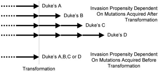 Mutation timing and numbers with respect to invasiveness. If invasion or metastasis depends on mutations acquired after transformation, clinically higher stage cancers would be expected to require more time and mutations. However, if an invasive phenotype depends on mutations acquired before transformation, cancers of different clinical stages could require similar numbers of oncogenic mutations and times for progression.