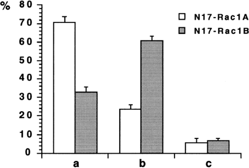 Quantitative analysis of the effects of the overexpression of the N17-cRac1A and N17-cRac1B proteins on neuritogenesis. Cultures of retinal neurons transfected as described in  Fig. 4 were used for the quantitation of the effects of the expression of the dominant-negative forms of the cRac1A and cRac1B  GTPases on neuritogenesis, as described in the Materials and  Methods. (a) Percentage of neurons with one or two poorly  branched neurites (more than three cell diameters in length); (b)  neurons with no or short neurites (less than three cell diameters  in length); (c) neurons with morphologies different from a and b  (i.e., with more than two neurites and/or limited branching). Results are expressed as the mean percentage of cells (± SE) from  four separate experiments. In a and b, the differences between  N17-cRac1A (white bars) and N17-cRac1B (gray bars) are significant (P < 0.001).