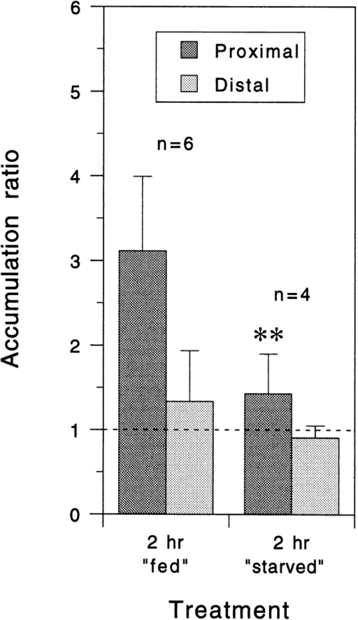 Quantitative analysis of neurofilament protein  accumulation proximal and  distal to the constriction site  after constriction for 2 h in  the presence or absence of  metabolic substrates. Each  column represents the mean  accumulation ratio for the  number of cells indicated and  the error bars represent the  standard deviation about the  mean as described in the legend to Fig. 5. For these experiments, the L-15-based  culture medium was replaced  with a simpler Dulbecco's  PBS-based medium with or  without 0.6% glucose and  0.055% sodium pyruvate  (fed and starved, respectively). The mean proximal  accumulation ratio in the presence of glucose and pyruvate was  lower than for axons constricted for the same period of time in  L-15-based medium (Fig. 5 A) but it was, nevertheless, reduced  significantly when these two substrates were omitted (P = 0.01,  t test).