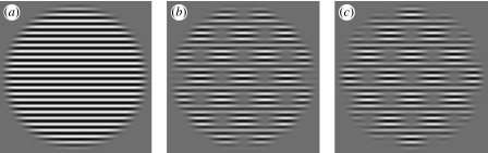 Stimuli used in experiments 2 and 3: (a) full stimulus (b) 'white' checks (c) 'black' checks. All three stimulus types served as pedestal (mask) and target in various combinations. They had a diameter of 9° displayed on a uniform square grey region with a width of 20.5° in the centre of the monitor. Closely related stimuli were used in experiment 1.