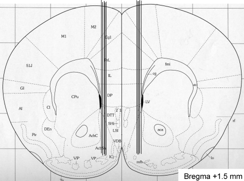 Verification of probe placement. A coronal mouse brain section showing ten representative probe placements (vertical lines) in the NAcc of mice used in the present study (Franklin and Paxinos 1996). Ten representative placements are illustrated, but all other placements were within the NAcc shell. The probe is not shown to scale, and the outer diameter of the probe was 310 μm. Placements outside this area were not included in the statistical analysis. The number given in the brain section indicates millimeters anterior (+) from bregma