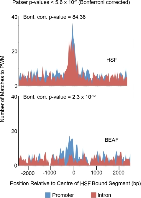 The BEAF cis regulatory motif is enriched in promoters, but not introns, bound by HSF.The occurrence of 111 PWMs from TRANSFAC and the Drosophila DNase I Footprint Database in HSF-bound promoters and introns was scored with Patser [38]. The histograms show the number of matches (Bonferroni corrected p-value<5.6×10−2) to PWMs representing HSF and BEAF binding sites in 50 bp windows centered on the peak of each HSF-bound segment (blue for promoters, red for introns). The PMW for DREF is very similar to the one for BEAF and gives the same result. P-values at the top right of each histogram indicate the probability given by a X2 test that the difference in the number of matches to the PWM found in promoters and introns is due to chance.