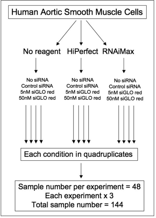Experimental conditions and total number of samples. Human aortic smooth muscle cells were transfected in the presence or absence of a transfection reagent (HiPerfect™ or RNAiMax™; 0.375 μl/100 μl each). Each group was further divided into four conditions: no siRNA, 50 nM unlabeled control siRNA, and 5 nM and 50 nM of siGLO Red transfection indicator. Each treatment was carried out in quadruplicates and each experiment was repeated three times for a total sample size of 144.