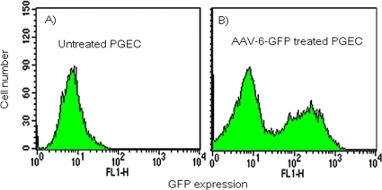 AAV-6-GFP transduction of human primary genital epithelial cells was assessed by flow cytometry to detect GFP expression.(A) untreated cells. (B) transduced with AAV-6-GFP.