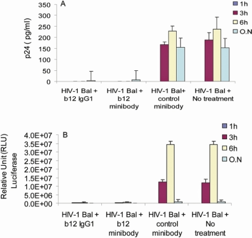 Inhibition of HIV-1 transfer and activity by b12 minibodies in the human VEC organotypic model tissues.After a 1 h pre-incubation of b12 minibodies or full-length b12 IgG (10 µg/ml) with HIV-1bal (50 ng), medium from the basal chambers were collected at different time points and tested for inhibition of HIV-1bal transfer by measuring p24 content by ELISA (A) and for inhibition of virus infectivity by incubation on TZM-bl target cells (B). Note that media collected at 3 and 6 h from tissue samples treated with HIV-1bal and b12 IgG1 antibodies or with b12 minibodies had almost completely lost their ability to infect TZM-bl cells. Irrelevant 11 A minibodies served as negative controls.