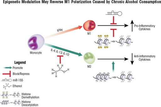Chronic alcohol consumption skews macrophage polarization toward an M1 (i.e., pro-inflammatory) phenotype, leading to excessive or prolonged inflammation. Two approaches using epigenetic modulators—microRNA 155 (miR-155) and histone deacetylase inhibitors—can potentionally reverse protein translation or gene transcription of M1 pro-inflammatory cytokines. Another type of enzyme—histone lysine (H3K27) demethylases—increase transcription of M2 anti-inflammatory cytokines. Factors that increase protein levels or enhance activity of H3K27 demethylases therefore may potentially be utilized to promote M2 polarization.