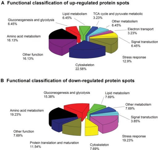 Functional classification of up-regulated (A)/down-regulated (B) proteins from the liver of C. carpio in the T2 group.