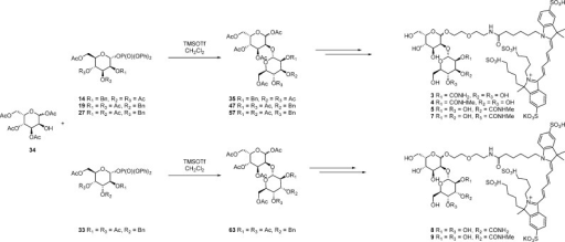 General Strategyfor the Synthesis of Disaccharide–Dye Conjugates