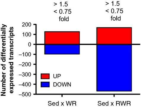 Differentially expressed genes in the WR and RWR. The numbers above each bar indicate the selection of genes from the total microarray datasets within a defined fold range of greater than 1.5‐fold and less than 0.75‐fold.