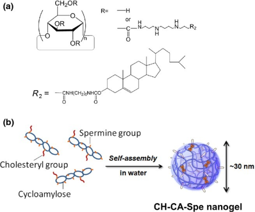 Structure of CH-CA-Spe nanogel. Schemes of chemical structure (a) and self-assembly (b) of CH-CA-Spe nanogel are shown.