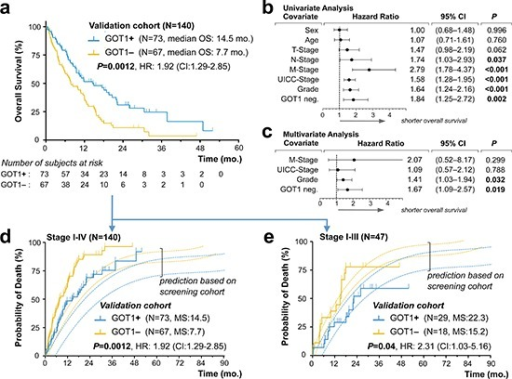 Validation of GOT1 expression status as an independent prognostic biomarker in pancreatic ductal adenocarcinoma(a) Kaplan–Meier estimates of outcome for GOT1 positive vs. negative samples in our validation cohort. (b, c). Forest plots of log hazard ratios (HR) from univariate (b) and multivariate (c) Cox proportional regression models for overall survival according to baseline clinical characteristics. Note, for comparison of effect size among characteristics associated with shorter overall survival, we plotted GOT1-negativity (GOT1 neg.). (d, e) Stacked cumulative incidence of death in the validation cohort, plotted over our prediction model that was built based on survival data in our screening cohort (Figure. 2). Note, the shift between validation- and prediction curves (d) is due to the inclusion of 93 patients with biopsy-confirmed metastatic PDAC; curves shift when comparison is restricted to patients in stage I–III(e).Abbreviations: mo., months; HR, hazard ratio; CI, confidence interval.
