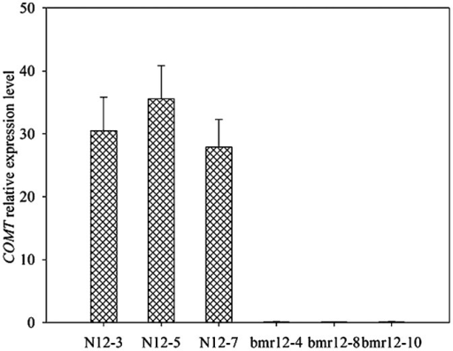 Quantitative RT-PCR analysis of the expression of the COMT gene in bmr-12 and N-12 plants from F3 populations. Relative values of COMT gene expression in the 4th internode of the main stem, including bmr-12 and N-12 lines, are shown as a percentage of COMT expression activity. Error bars represent standard deviation.