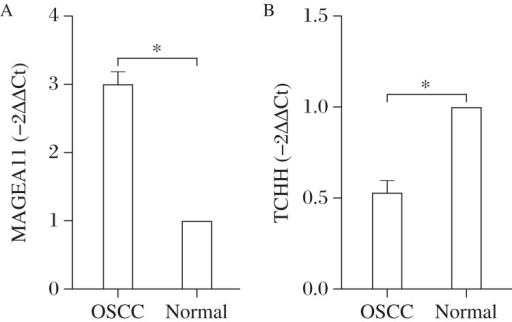 Expression of MAGEA11 (A) and TCHH (B) in OSCC tissues.A: MRNA transcript levels MAGEA11 and B: TCHH in oral squamous cell carcinoma (OSCC) tissues n  =  15, *P < 0.05 vs. normal controls.