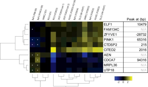 A common set of FOXO-regulated genes in human and mouse cell lines overexpressing FOXO3 or FOXO4FOXO3 and FOXO4 induced changes in HUVECs and UMRC2, RCC4, BaF3, DLD1-derived DL23 [19] and HEK-293T cells were compared. Depicted are genes statistically significantly (P<0.05) regulated in relevant datasets (see the Materials and methods section for details). Asterisks indicate genes that are statistically significantly (ANOVA, P<0.05) regulated by PI3K or PKB/Akt activation, in opposing direction compared with FOXO3/4 activation. The right-hand side shows the distance of the closest FOXO3 peak in DL23 cells deduced from [27].