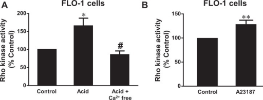 Role of calcium in Rho kinase activation.A. Acid treatment (pH 4.0, 1 hour) significantly increased Rho kinase activity, an increase which was blocked by the removal of calcium with calcium free medium plus 1 mM EGTA and 1μM thapsigargin, suggesting that acid-induced activation of Rho kinase may be dependent on intracellular calcium increase. B) A23187 significantly increased Rho kinase activity, suggesting that intracellular calcium increase may activate Rho kinase in FLO-1 EA cells. N = 3, ANOVA * P<0.05, compared with control group; # P<0.05, compared with acid group; t test ** P<0.05.