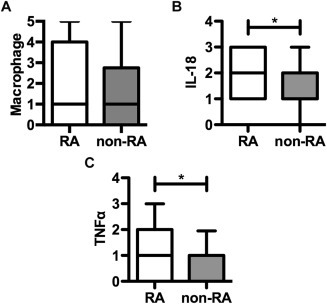 Macrophage, interleukin‐18 (IL‐18), and tumor necrosis factor (TNF) evaluation in the aortic adventitia of late‐stage cardiovascular disease (CVD) patients with (n = 19) and those without (n = 20) rheumatoid arthritis (RA). CD68+ macrophages (A), IL‐18 (B), and TNF (C) were evaluated immunohistologically, and the results were scored as described in Patients and Methods. Data are shown as box plots. Each box represents the 25th to 75th percentiles. Lines inside the boxes represent the median. Lines outside the boxes represent the 5th and 95th percentiles. ∗ = P < 0.05.