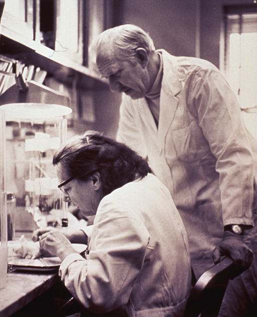 <p>Interior view of a laboratory showing Dr. M.F. Stanton and technician Eliza Miller.</p>