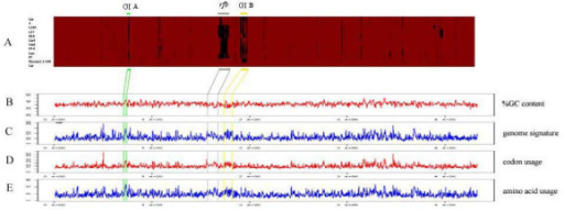 Comparative analysis of the diverged L. interrogans genomes observed by CGH with respect to their signatures defining genomic islands. (A) The presence/absence CDSs of all tested strains comparing to that of strain Lai ordered from LA0001 to LB367. Red and black areas denote the presence and absence of genes respectively. The blue bar indicates the GI A region, the grey bar indicates the rfb locus, and the yellow bar indicates the GI B region. These 3 regions are specifically drawn to the following sketches indicating the variations in strain Lai for properties of possible genomic islands: CG content (B), genome signature (C), codon usage (D), and amino acid usage (E).