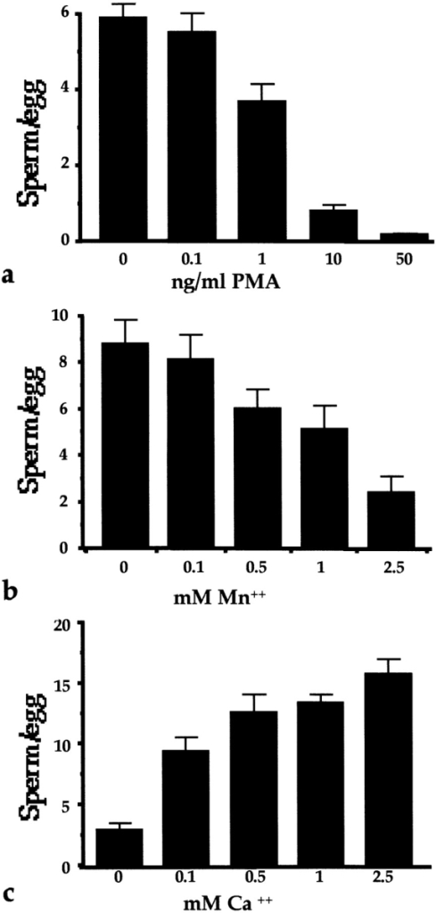 Effects of PMA, Mn2+, and Ca2+ on sperm binding to  zona-free eggs. (a and b) Eggs were placed in drops of TE (that  contains 2.4 mM CaCl2 and 0.47 mM MgCl2), containing increasing concentrations of (a) PMA or (b) MnCl2 for 15 min, and incubated with capacitated sperm. (c) Eggs were pretreated in drops  of Puck's saline A supplemented with increasing concentrations  of CaCl2, and incubated with capacitated sperm. After 1 h at  37°C, eggs were washed, fixed, and analyzed for sperm binding by  phase-contrast microscopy. Approximately 30 eggs were used per  condition. Values indicate average ± SE.