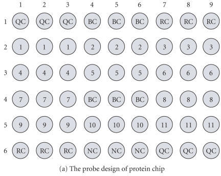 The application of protein chip for autoantibodies in patients serum.