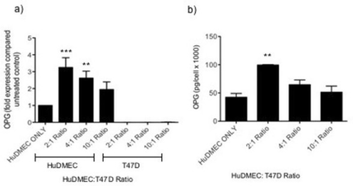 Effect of tumour cell contact on endothelial cell OPG production. HuDMECs were co-cultured with the T47D cell line at HuDMEC: T47D ratios of 2:1, 4:1 and 10:1 for 72 hours as described in materials and methods. HuDMECs were separated from the T47D cell line and gene expression measured in the separate cell populations using real-time quantitative PCR (a). OPG secretion was assessed using ELISA (b). For real-time quantitative PCR, values were normalised to GAPDH and are given as fold expression compared to untreated HuDMECs. Data are represented as mean ± S.E.M. from three independent experiments. ***, p < 0.001 compared to control cells (HuDMEC only); **, p < 0.01 compared to control.