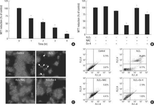 Effects of the NAC or Ex-4 on oxidative stress-induced apoptosis. HIT-T15 cells were pretreated NAC (5 mM) or Ex-4 (25 nM), for 1 hr before stress induction. (A) After exposure to 100 µM H2O2, HIT-T15 cells apoptosis increased by time. Cells viability was measured with the MTT reduction assay. (B) After treatment of H2O2 (100 µM, 2 hr), effects of the NAC or Ex-4 on cell viability were measured by MTT reduction assay. (C) H2O2 (100 µM, 4 hr)-induced apoptotic nuclei reduced via NAC or Ex-4. Photographs were taken using a blue filter at a magnification of ×400. (D) Flow cytometric analysis of apoptosis of HIT-T15 cells exposed to H2O2 (100 µM, 8 hr). Apoptotic cells were measured by FACS analysis after Annexin V/PI staining. FL1: Annexin V-FITC, FL2: PI. Data are shown as the means±SE of six independent experiments.*P<0.001 vs control cells; †P<0.001 vs H2O2 alone.