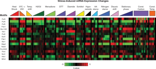 mRNA expression changes associated with RNA motifs. A heatmap illustrates the degree to which the relative expression levels of mRNAs containing each of the identified RNA sequence motifs (rows) changed under each of the environmental stress conditions shown (columns). For each motif and each stress condition we calculated the t-value measuring how much the average expression change of mRNAs with motif sites deviated from its expected value by chance. Relative increases in average mRNA expression levels are colored in red, and relative decreases are colored in green. For exact data values and supporting details see Supplementary Data S5.