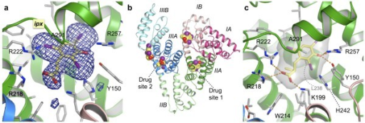 Co-crystal structure of HSA in complex with iophenoxic acid. (a) Simulated annealing omit map contoured at 3σ for iophenoxic acid bound in drug site 1 in sub-domain IIA. (b) Overview of HSA, coloured by sub-domain, showing the locations of the two primary drug sites and the four molecules of iophenoxic acid. (c) Close-up of iophenoxic acid bound in drug site 1. The ligand and selected side-chains are shown as sticks, coloured by atom type (carbon - grey (yellow in the iophenoxic acid); oxygen - red; nitrogen - blue; iodine - magenta). The surface of iophenoxic acid is shown as a semi-transparent grey surface. Hydrogen bonds and salt bridges are indicated by dotted orange lines.