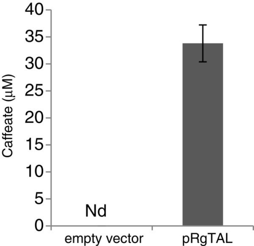 In-vivo enzyme activity of RgTAL towards L-dopa. Production of caffeate detected in the culture medium of an E. coli strain expressing RgTAL and fed with L-dopa. Error bars indicate mean values ± SD from three independent clones. Nd, not detected.