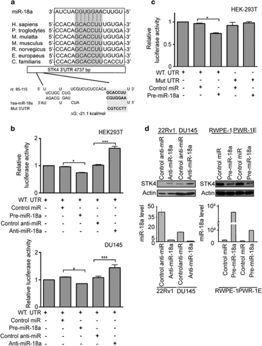 miR-18a directly binds the STK4 3′UTR to suppress the protein level. (a) Bioinformatics analysis demonstrates that the miR-18a seed region is highly conserved in different species. The computer-predicted binding energy is −21.1 Kcal/mol. (b) Luciferase reporter assay in HEK293T (upper panel) and DU145 (bottom panel) cells, with the cotransfection of WT-reporter and control-miR or pre-miR-18a as well as cotransfection of WT-reporter and control anti-miR or anti-miR-18a as indicated. Each bar represents the mean and s.d. of three independent experiments. *P<0.05, **P<0.01, ***P<0.001. (c) HEK-293T cells were transfected with the mutant STK4 3′UTR to examine the binding affinities of these sequences. The mutant UTRs of STK4 had no effect on reporter activity. (d) STK4 protein level after miR-18a knockdown in 22Rv1 and DU145 cell lines or overexpression of miR-18a in RWPE-1 and PWR-1E cell lines, respectively. At 48 h after transfection, total protein and RNA were extracted and used for western blotting (upper panel) and miRNA-quantitative RT-PCR (bottom panel) analysis.