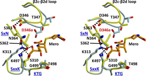 Stereoviewof a superimposition of the structures of PBP2-t3-6140and wild-type PBP2 in which a meropenem molecule was docked via superimpositionwith a crystal structure of PBP2 in complex with meropenem. Wild-typePBP2 is colored yellow, PBP2-t3-6140 blue, and meropenem orange. Thehydrogen bond between Asp346 and Ser363 is shown as a dashed line,and the inserted Asp is labeled in red. The three conserved active-sitemotifs of PBPs are labeled in blue.