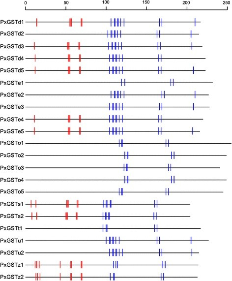 GSH and substrate binding sites of glutathioneS-transferase genes. The short vertical lines represent functionally conserved residues of GST genes among insect species. Red vertical lines represent the GSH binding sites of GSTs (G sites) and blue vertical lines represent the substrate binding sites GSTs (H sites).