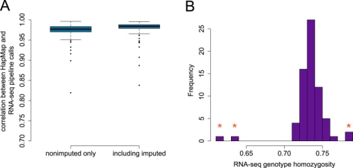 Accuracy of genotype calls for SNPs independently typed inHapMap3.(A) Distribution of correlations between SNPs called usingRNA-seq data and SNPs called independently by HapMap3 (n = 9919variants). (B) Estimated homozygosity levels for n =69 YRI individuals at the same set of sites; outliers (denoted with redstars) reflect those individuals with the lowest correlation betweenRNA-seq-based genotypes and HapMap3 genotypes. The four starred outliersin (B) include the three lowest accuracy individuals in theboxplots in (A).DOI:http://dx.doi.org/10.7554/eLife.04729.008