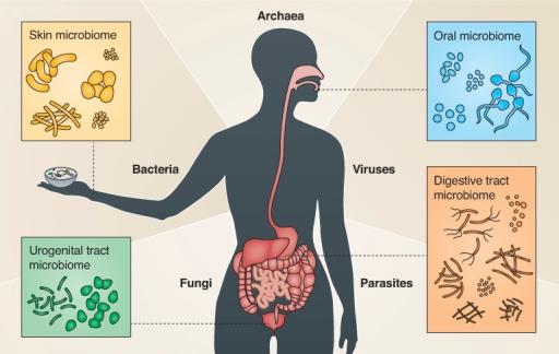 The human microbiome. Illustration depicting the diversity of the human body's microbiomes at their respective body sites. The outstretched hand reaching for the cell symbolizes the potential of cell biology to enrich microbiome studies.