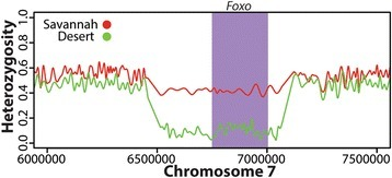 Evidence for a selective sweep near Forkhead Box Protein O (Foxo) in Desert population. The average heterozygosity is shown for all individuals sequenced in the Savannah and Desert populations across a 1.5 Mb region on chromosome 7. The shaded area indicates the location of Foxo. A marked reduction in heterozygosity for the region surrounding Foxo is observed in the Desert population