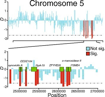 Selected chromosomal regions with signatures of positive selection according to Tajima's D analysis. The top panel shows a section of chromosome 5. Tajima's D was calculated in 5 kb windows and scores are represented by vertical bars. Any bar colored red represents a window where Tajima's D is significantly negative. Conversely, bars colored light blue represent windows where Tajima's D is not significantly different from values expected under a site evolving neutrally. The bottom panel is a magnification of the area containing a ~20 kb stretch of significant Tajima's D scores. Green blocks represent locations of genes contained within the interval
