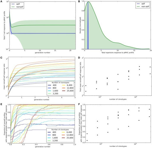 Broad coverage to non-self is maintained during the development of a self-tolerance repertoire. (A) The mean (±standard deviation) total T cell response to self (blue) or non-self (green) pMHC profiles over time with N = 2,000 and M = 200. (B) After 30,000 iterations of the update algorithm with parameters as in (A), the distribution of total T cell response to self (blue) and non-self (green) pMHC profiles. (C) The ability of the repertoire to successfully mount an immune response to non-self pMHC profiles, measured as the average total response to a non-self profile divided by the average total response to a self profile, over time. The number of T cell clonotypes in a simulation is indicated by color, with the number of self profiles simulated ranging between 100 and 800. (D) The relationship between number of T cell clonotypes and the average total response to a non-self profile divided by the average total response to a self profile after 30,000 iterations of the update algorithm. (E) The proportion of non-self profiles that have a total T cell response greater than the mean response toward self profiles over time. The number of T cell clonotypes is indicated by color. (F) The relationship between the number of T cell clonotypes and the proportion of non-self profiles having a stronger total T cell response than the mean response to self profiles after 30,000 cycles of the update algorithm. Other model parameters for all panels are: self-response threshold τ = 1, growth rate ν = ln 2 δt–1, learning rate η = 0.002001 δt–1 and proportion of non-zero affinities γ = 0.01.
