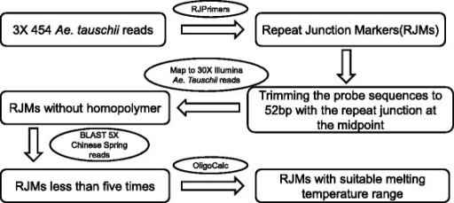 Schematic presentation of a pipeline for the development of RJMs from Ae. tauschii sequences