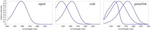 Spectral response curves of mono-, di- and trichromatic observers used in the study, normalized to have a value of 1 at peak wavelength.