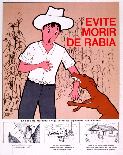 <p>Multicolor poster with red and black lettering.  Visual image at top of poster.  Image is an illustration of a man in a corn field being bitten on the arm by a dog that foams at the mouth.  Title near upper right corner.  Publisher information and related logos in lower left corner of image.  Initial caption words below image.  Remaining caption text accompanies a series of illustrations showing what to do in case of a bite--the arm being washed, a dog tied to a tree, and a man approaching a health center.</p>