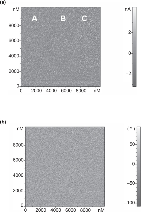 Electric force microscope images of a-C:H (Floating) as deposited (scan size 10 μm × 10 μm) (a) MAG*COS (b) Phase.